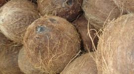Anbau auf Kokosmaterial: mit dem Mythos aufräumen