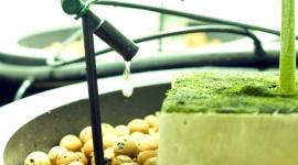 Offene Hydrokultursysteme mit Inertsubstraten