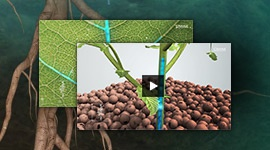 CANNA Produkt Animation Videos